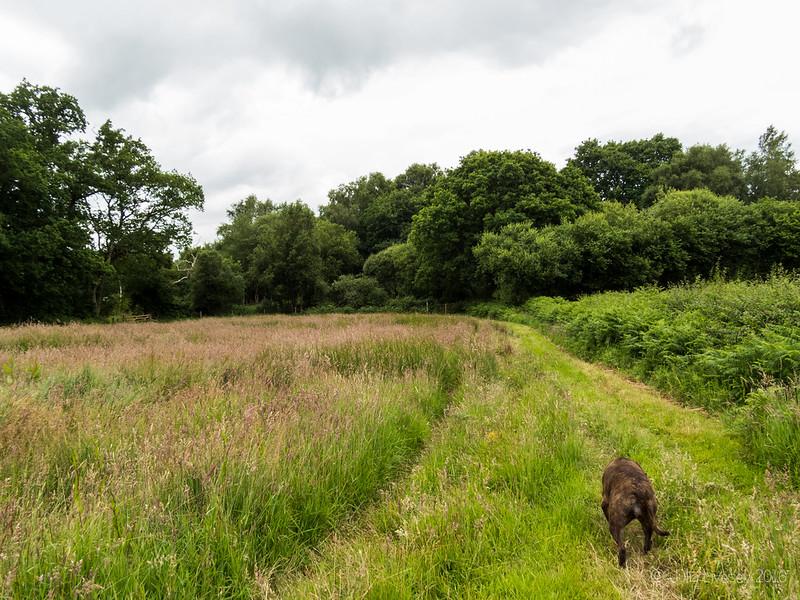 Jez walks around the edge of the field
