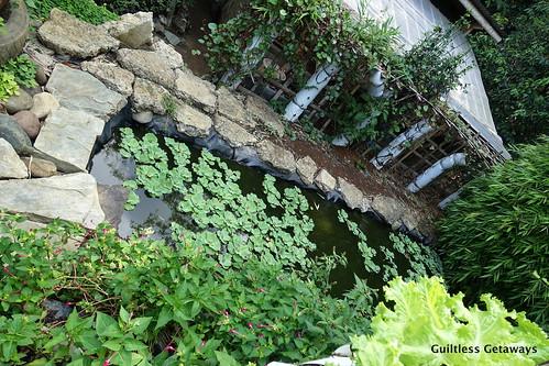 jayas-garden.jpg