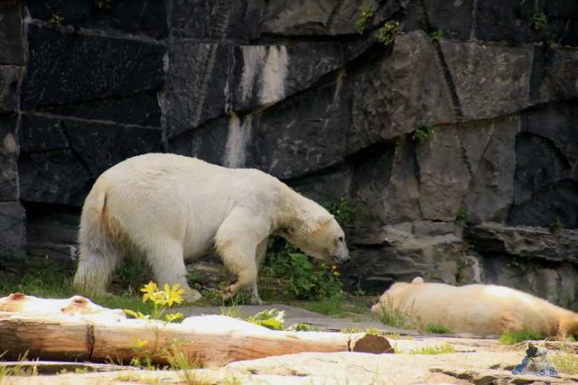 Tierpark Berlin 29.05.2016   065