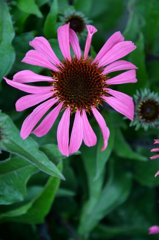 een bloemetje op tafel
