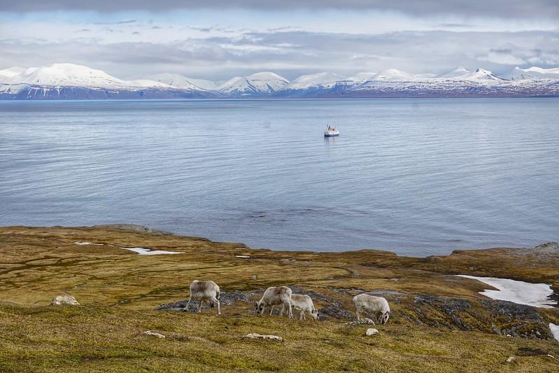 Life Above the Arctic Circle
