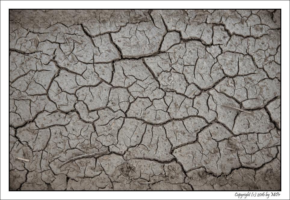 DPC #252 'Dry'
