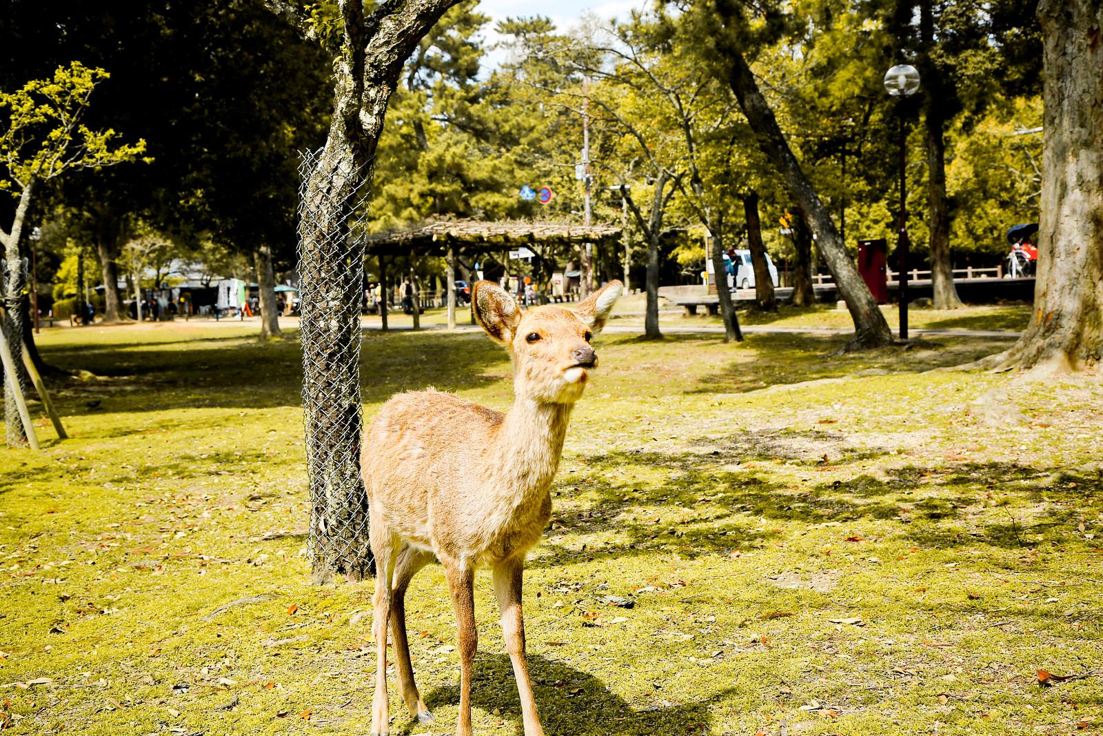 2015 April Kansai 48