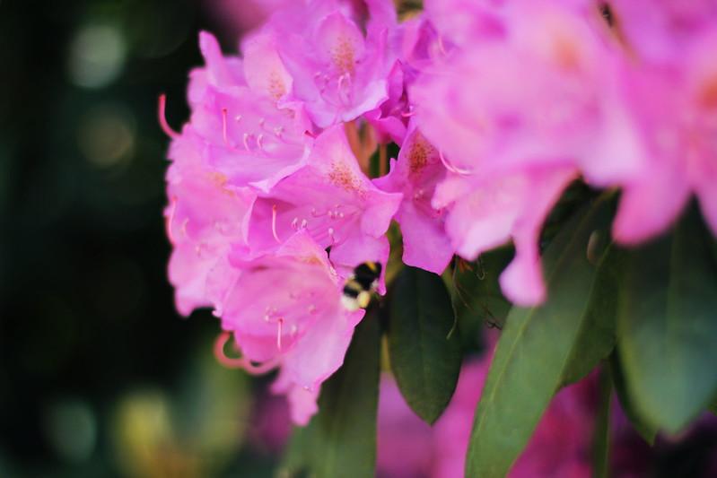 Flowerpower | 260516