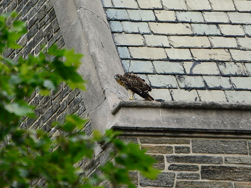 Cathedral RT Fledge 2 - 9434