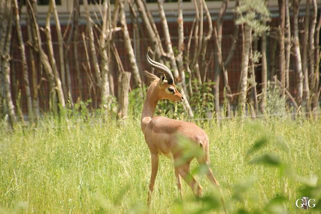 Tierpark Friedrichsfelde 29.05.201650