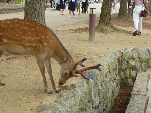 OB-jp16-Nara (2)