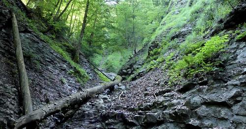 Lit d'un ruisseau