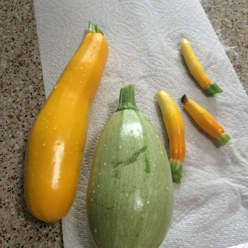 Radishes 初収穫