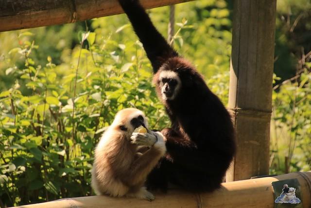 Tierpark Berlin 29.05.2016   026