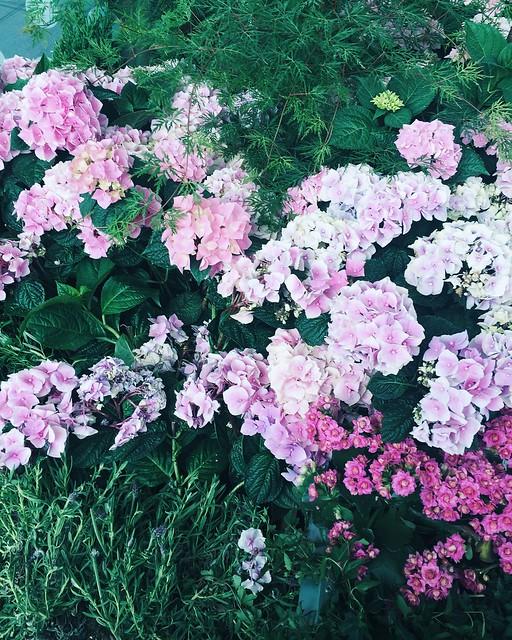 Untitled, juhannus, keskikesä, kukat, flowers, midsummer, kesä, summer, yötön yö