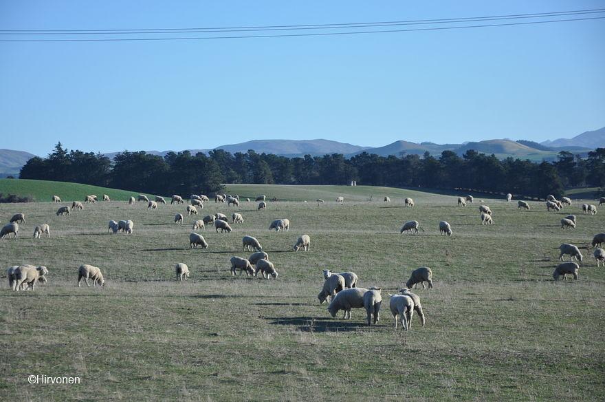 20160607-131555-NZ