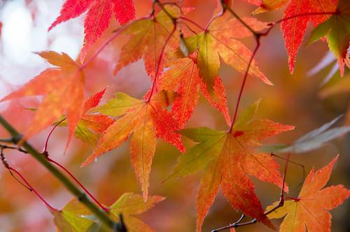紅葉狩り - 東山公園 04