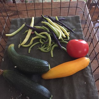#zucchini #tomato #radish & #purple and #greenbeans #gardensbounty