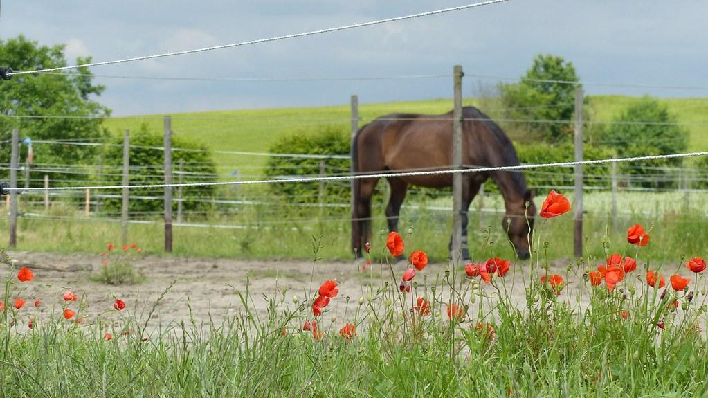 Pferdekoppeln bei Stadecken