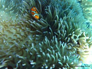 A Nemo