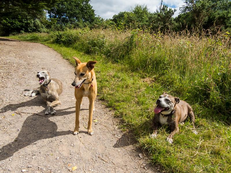 Jez with her friends Twink and Twiglet