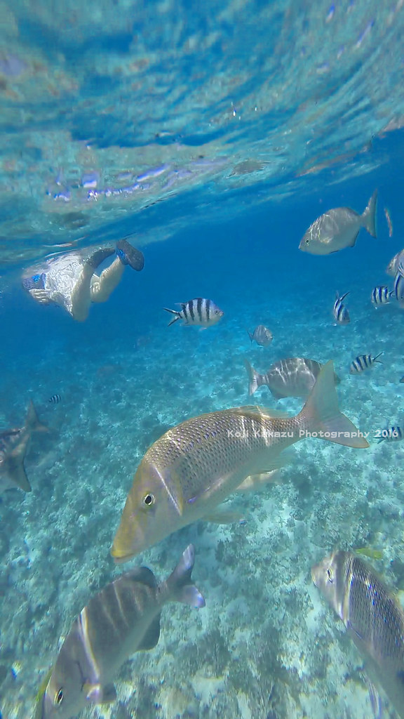 コマカ島-2016-06-19-195
