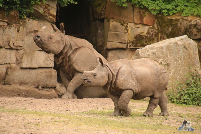 Tierpark Berlin 28.05.2016  0212