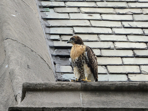 Cathedral RT Fledge 2 - 9055