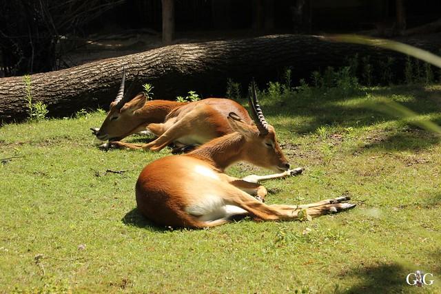 Sonntags-Besuch Zoo Berlin 03.07.201650