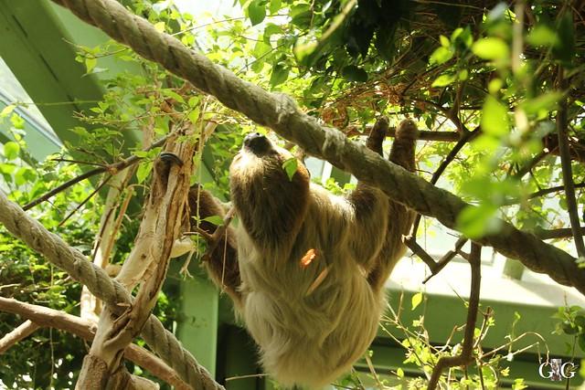 Sonntags-Besuch Zoo Berlin 03.07.201634