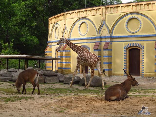 Zoo Berlin 27.05.2016   0117