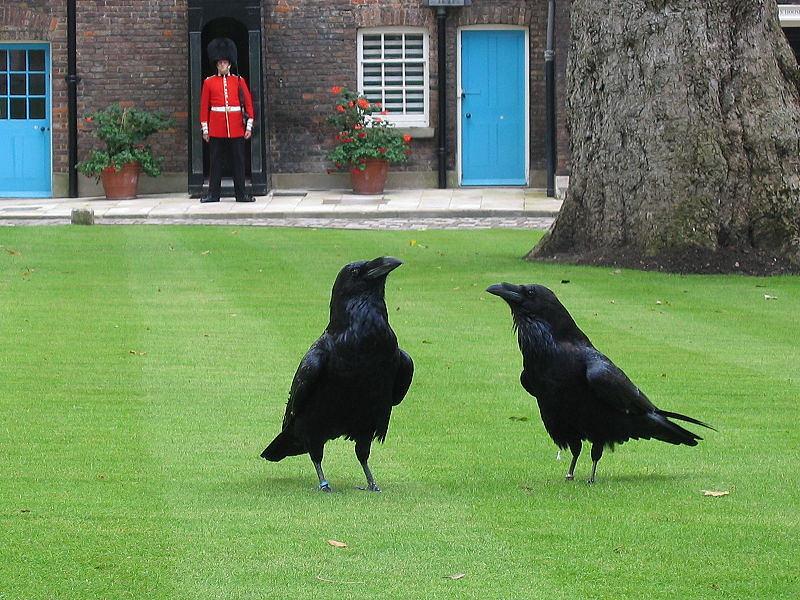 London Ravens