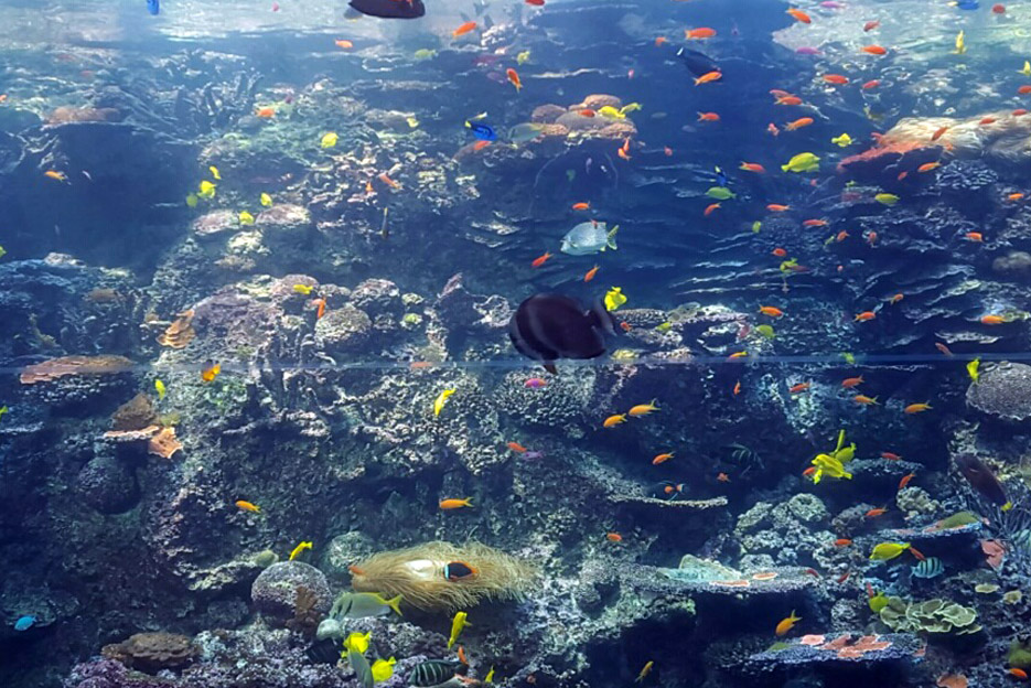 101615_aquarium13