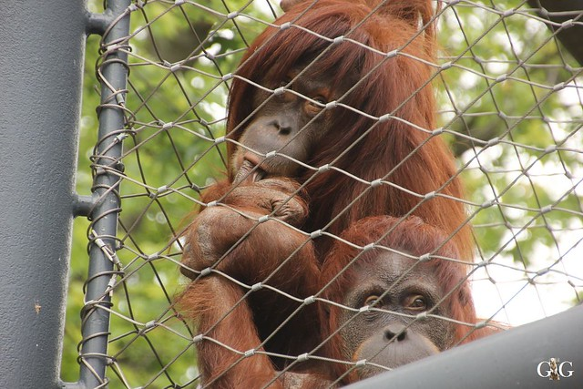 Sonntags-Besuch Zoo Berlin 19.06.201656