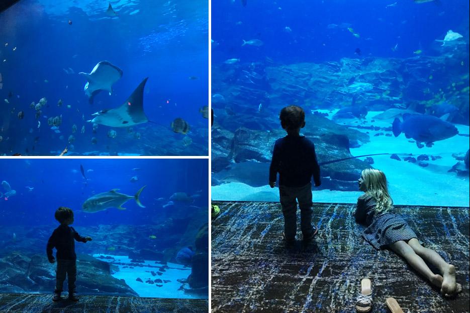 101615_aquarium19