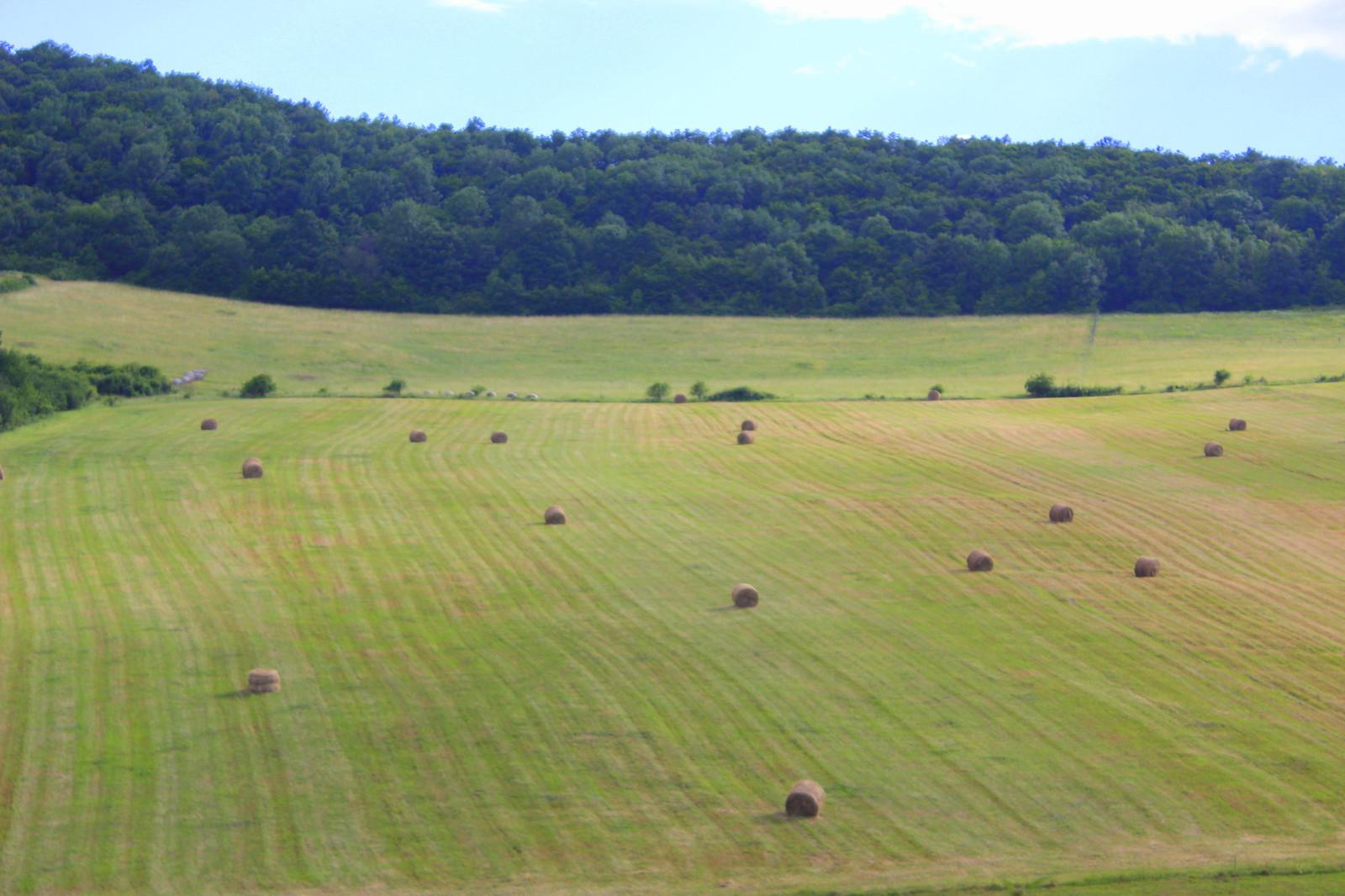budapest meadow