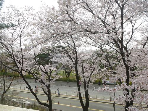 C16-Seoul-Grand Parc-Musee-Jardin-j4 (14)