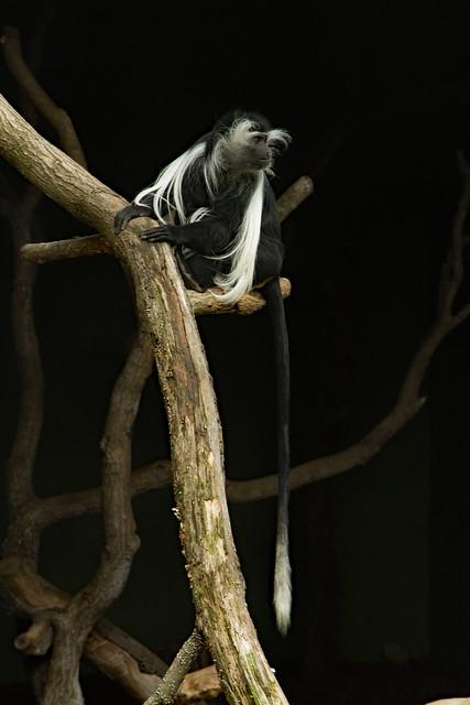 27660620222 4c18b576d0 z Birmingham Zoo