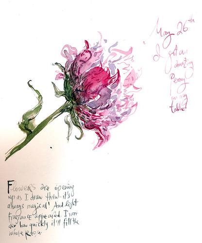 Sketchbook #98: Peony