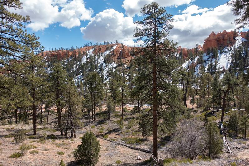 Bryce Canyon-00363 (2)