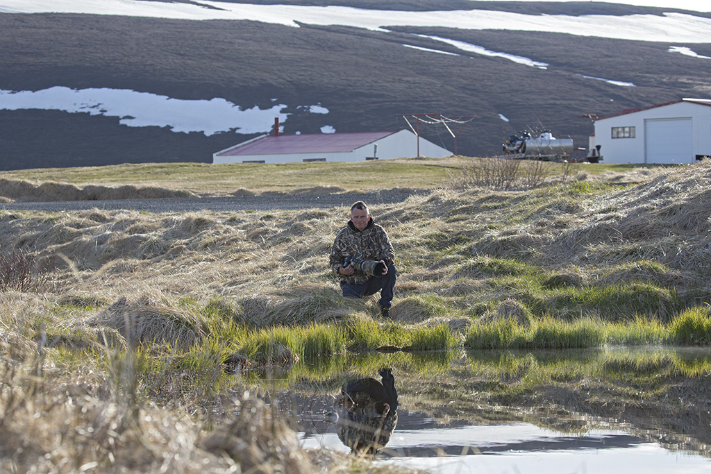 The Phalarope Pond    Iceland