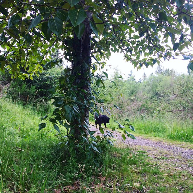 "Bear Cub playing hide and seek at the park today. She ""disappeared"" for a full 10 minutes. I was not amused!"