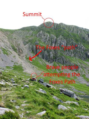 The Fox's Path