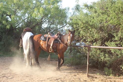 Texas Musical 061816 (77)