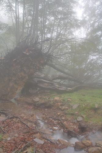 Parque natural de #Gorbeia #Orozko #DePaseoConLarri #Flickr -083