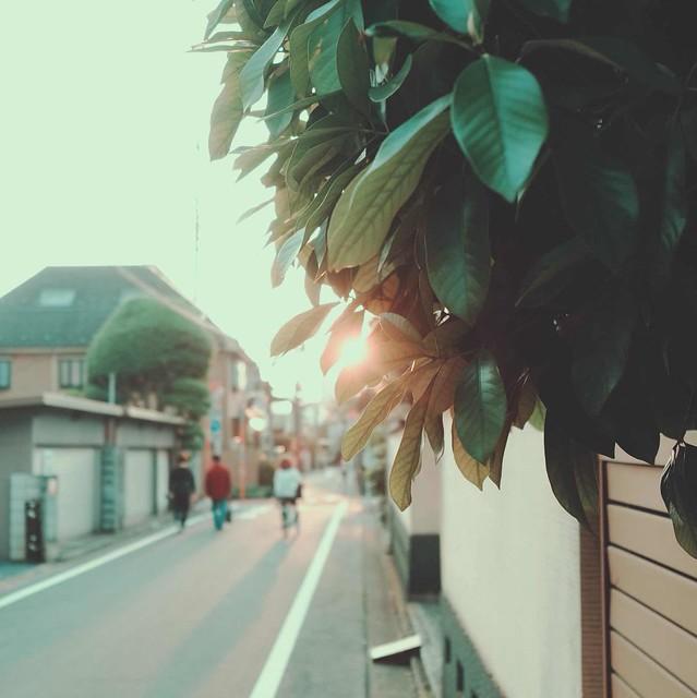 Leaves against sunset