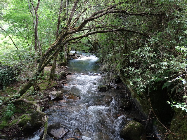 Río Pacios en Quiroga