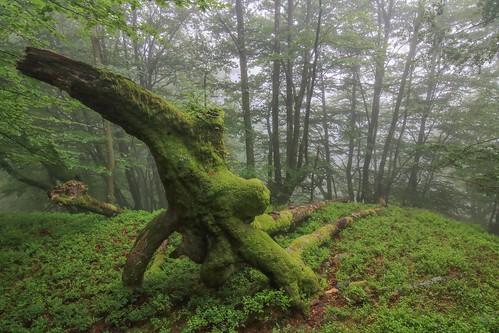 Parque Natural de #Gorbeia #Orozko #DePaseoConLarri #Flickr - -617