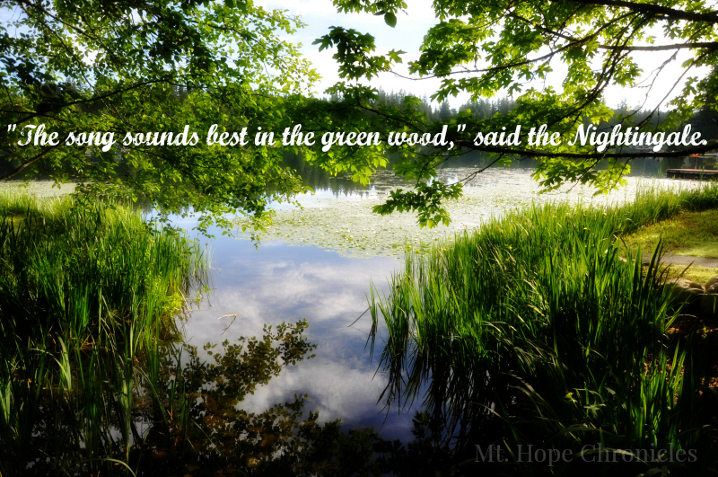 Song in the Green Wood @ Mt. Hope Chronicles