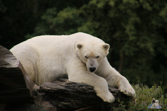 Tierpark Berlin 29.05.2016   0233