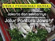Dibuka Pengiriman Massal ke Jakarta dan Jalur Pantura Jawa, Juli 2016
