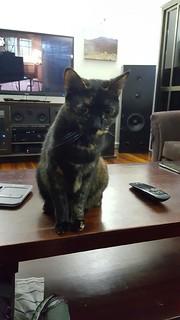 Cat Sagan