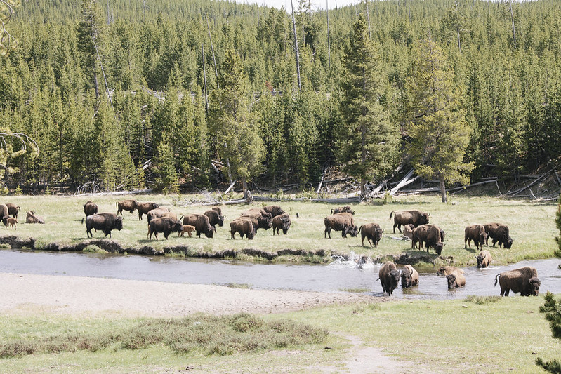 Montana_May16_114