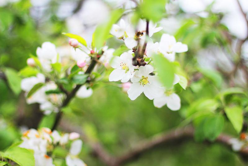 omenan kukkia blogi 2